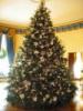 Vánoční stromeček v Holandsku